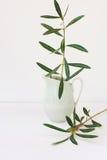 Оливковое дерево разветвляет в кувшине, белой предпосылке, модель-макете, введенном в моду изображении для социальных средств мас Стоковое Изображение RF