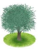 Оливковое дерево иллюстрация штока