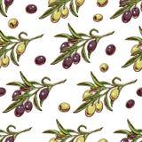 Оливковые ветки Стоковые Изображения