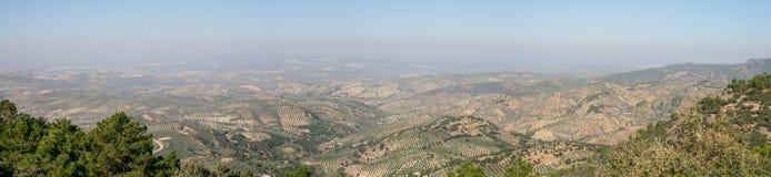 Оливковые дерева в Jaen (Испания) Стоковые Фотографии RF