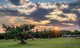 Оливковые дерева в Sicila стоковое фото rf