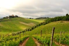 Оливковые дерева и виноградники в Тоскане, Италии Стоковое Изображение