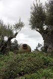 Оливковые дерева и старые вазы в саде Стоковые Изображения RF