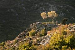 Оливковые дерева на утесах Стоковые Изображения RF