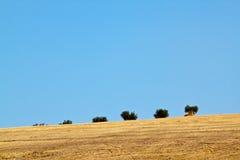 оливковые дерева поля Стоковые Изображения