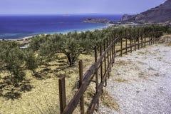 Оливковые дерева растя на холме над морем Стоковое фото RF
