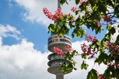 Олимпиады между цветя деревьями стоковое фото