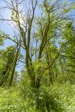 Олимпийские деревья тропического леса национального парка предусматриванные в мхе и лозах стоковые фотографии rf