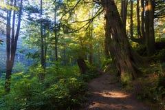 Олимпийский национальный лес Стоковое фото RF