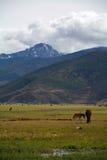 долина горы снега пасмурная Стоковое Изображение