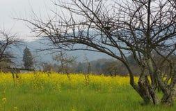 долина napa мустарда Стоковое Фото