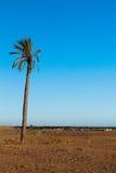 Одиночная ладонь в районе пустыни Северной Африки Douz Туниса Стоковое Фото