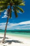 Одиночная ладонь кокоса на пляже с белым песком Стоковые Фото