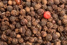 Одиночная красная перчинка в перчинках высушенных черного перца Стоковые Фотографии RF
