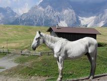 Одиночная лошадь в высокогорном выгоне с доломитами Sesto, южном Тироле, Италии в предпосылке стоковая фотография rf