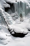 Одиночная сосна в снеге Стоковое Изображение
