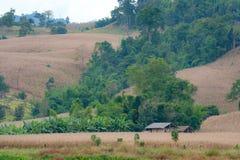 Одиночная хата стоит самостоятельно в поле Стоковые Фото