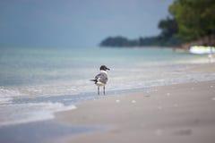 Одиночная чайка на пляже Стоковое фото RF