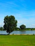 Одиночное дерево водой стоковые изображения
