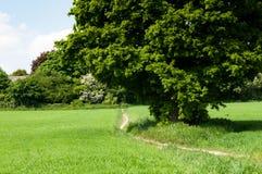 Одиночное дерево в поле в солнечности лета Стоковые Изображения RF