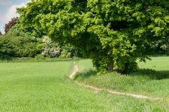 Одиночное дерево в поле в солнечности лета Стоковые Изображения