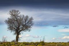 Одиночное дерево в пустыне с пасмурным голубым небом стоковые фотографии rf