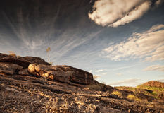 Одиночное дерево на неплодородных почвах Nourlangie в национальном парке Kakadu Стоковое Фото
