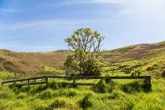 Одиночное дерево на солнечном зеленом горном склоне Стоковое Изображение