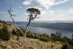 Одиночное дерево перед Лох-Несс Стоковое фото RF