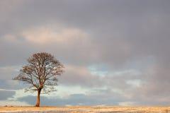 Одиночное дерево под большим небом Стоковые Изображения RF