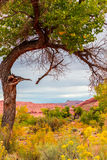 Одиночное дерево против рамки ландшафта падения Юты естественной Стоковое Изображение