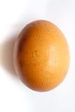 Одиночное коричневое яичко цыпленка Стоковые Фото