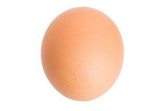 Одиночное коричневое яичко цыпленка Стоковые Изображения