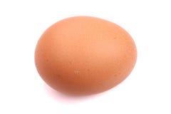 Одиночное коричневое яичко цыпленка Стоковая Фотография RF