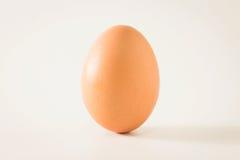 Одиночное коричневое яичко цыпленка Стоковое Фото