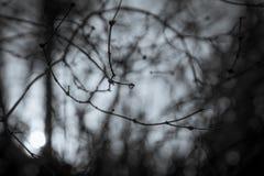 Одиночное падение на вербе Стоковое Изображение