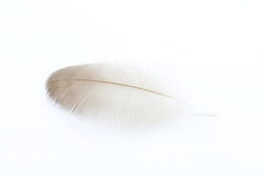 Одиночное перо утки стоковое изображение