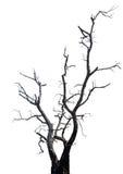 Одиночное старое и мертвое дерево. Стоковое Фото