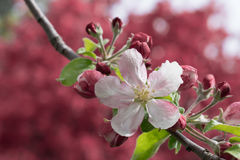 Одиночное цветение Стоковое Изображение