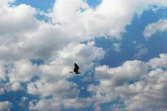 одиночно Стоковая Фотография RF