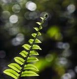Одиночные зеленые лист на черной предпосылке Стоковое Изображение