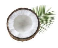 Одиночные листья половины кокоса изолированные на белизне Стоковые Изображения RF