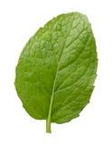 Одиночные лист свежей мяты стоковая фотография rf