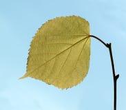 Одиночные лист Стоковые Изображения RF
