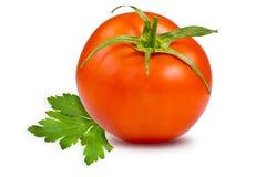 Одиночные томаты стоковое изображение
