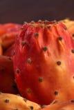 Одиночные Nopal или кактус Стоковые Изображения