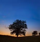 Одиночный большой дуб на заходе солнца или восходе солнца стоковые фотографии rf