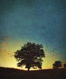 Одиночный большой дуб на заходе солнца или восходе солнца стоковое изображение rf