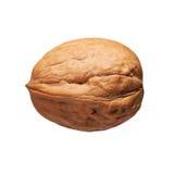 Одиночный грецкий орех в изолированной раковине Стоковые Изображения RF
