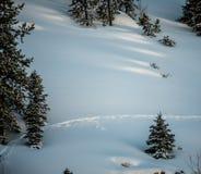 Одиночный животный след через свежий снег Стоковые Фотографии RF